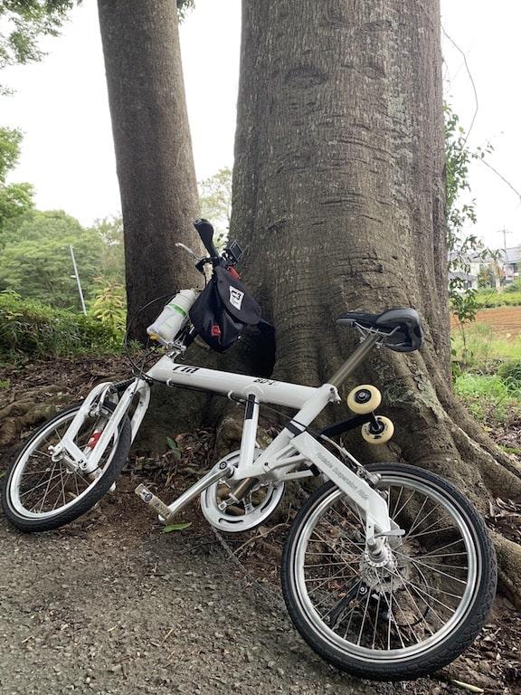 巨木と私の自転車