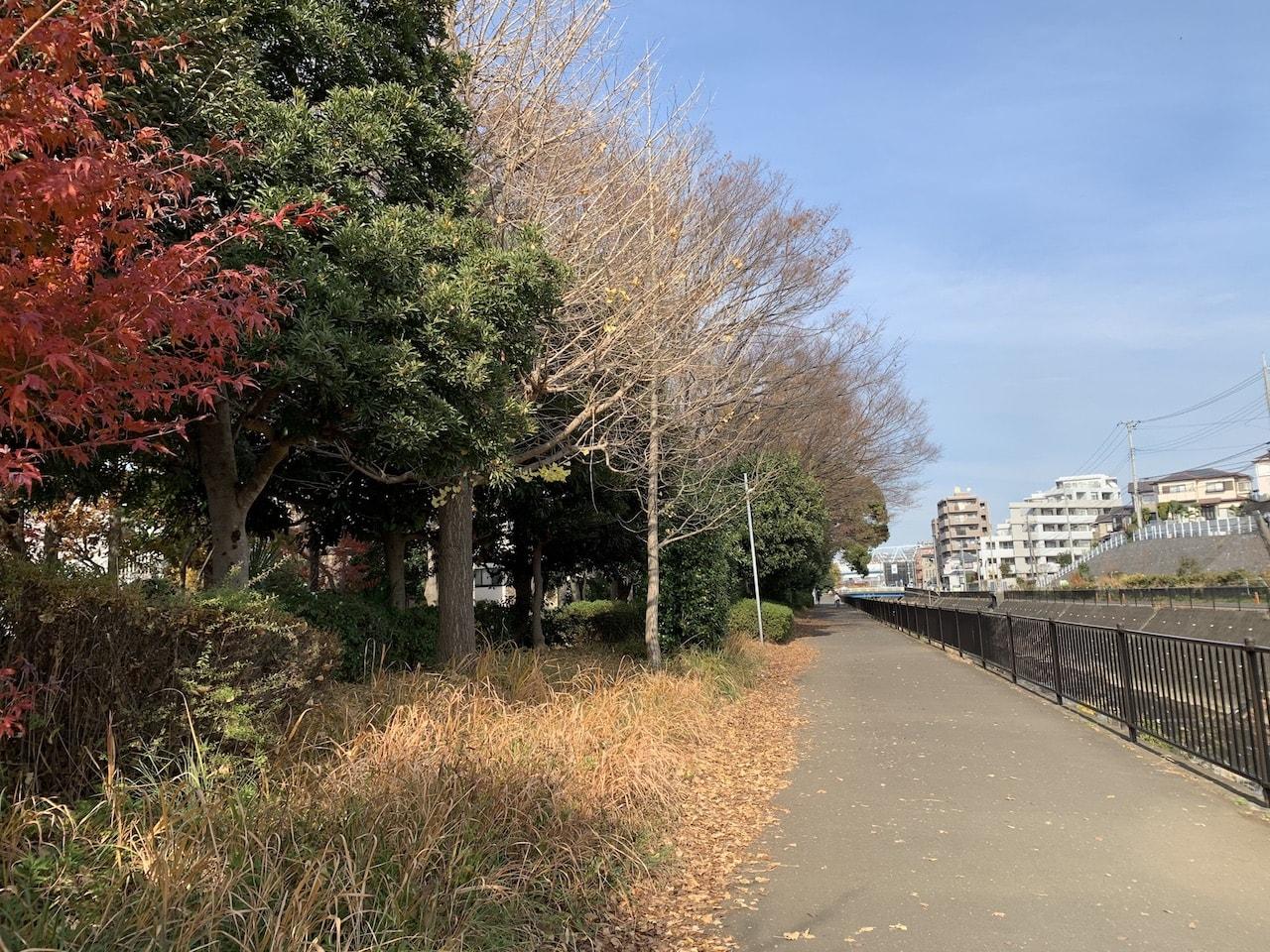 サイクリングロードと紅葉