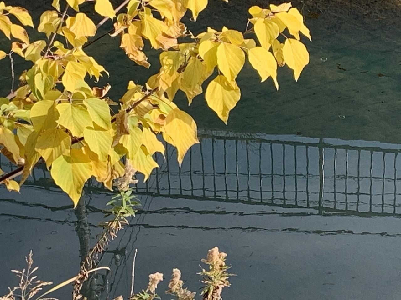 川面と葉っぱ