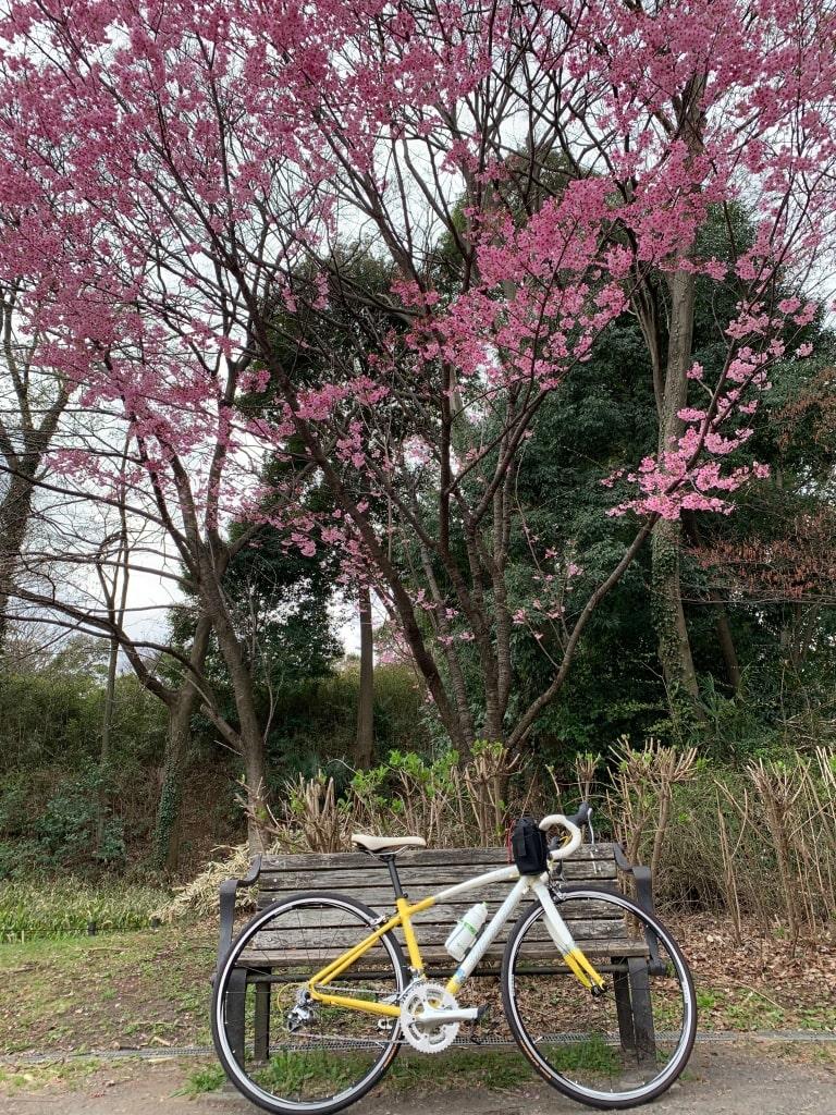 入ってすぐに、綺麗な桜