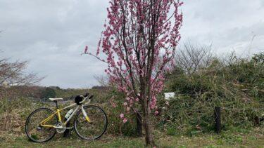 桜ライドと買い物ライド、2台の自転車を楽しむの巻