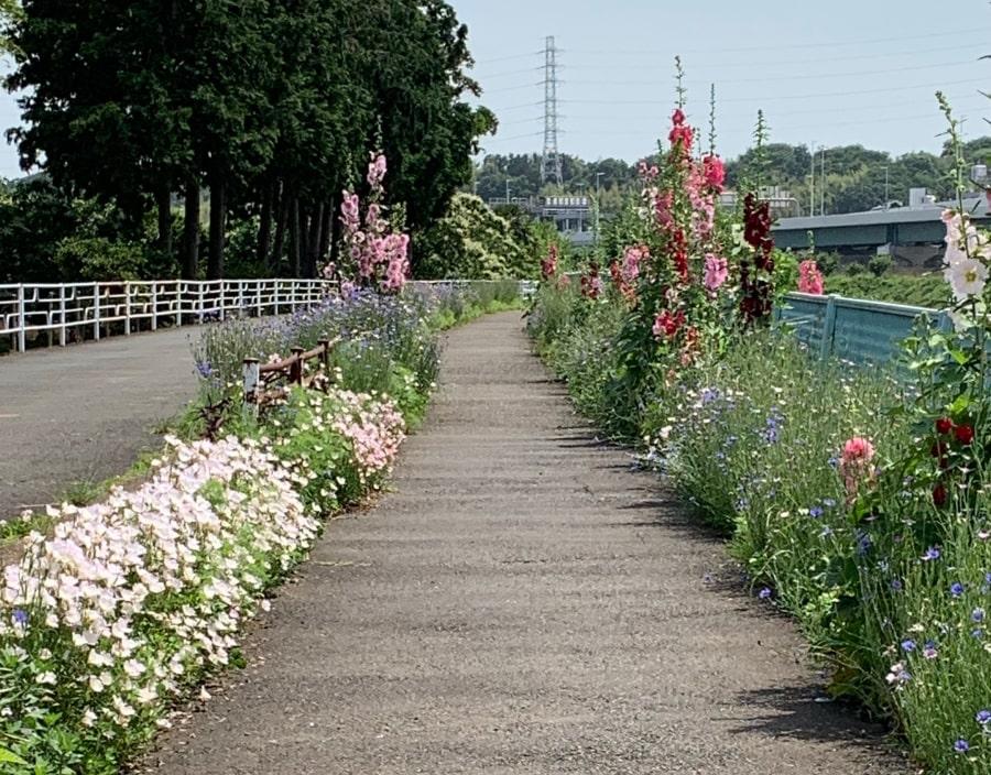 サイクリングロード 花
