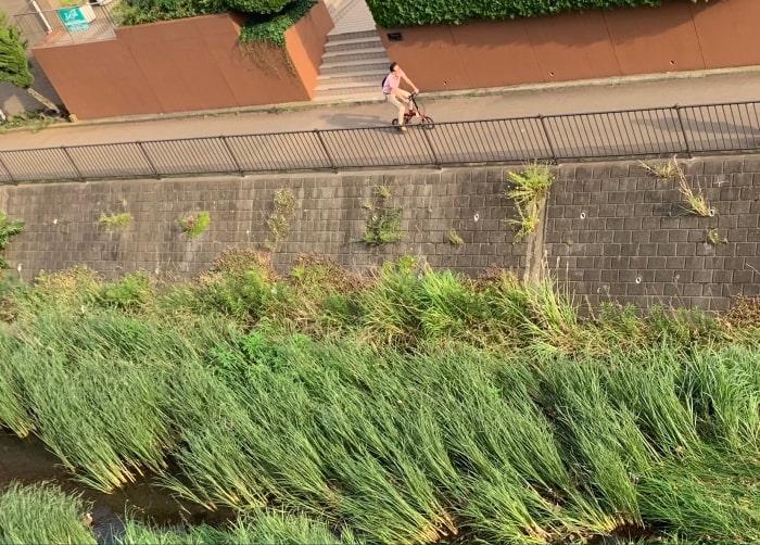 川沿い 自転車